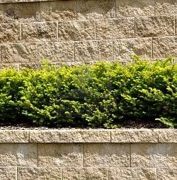 Retaining Wall Landscape 4